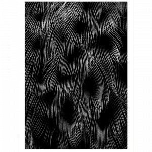 Kortkartellet Black Feathers Juliste 50x70 Monivärinen