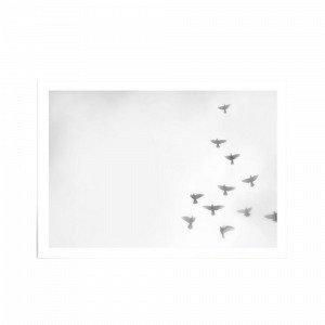Kortkartellet Copenhagen Doves Juliste Valkoinen 50x70 Cm