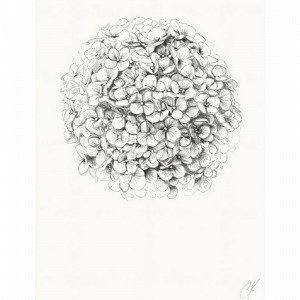 Kortkartellet Hydrangea Juliste 50x70 Monivärinen