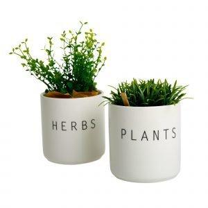 Koti Plants Ja Herbs Pienet Purkit 2 Kpl