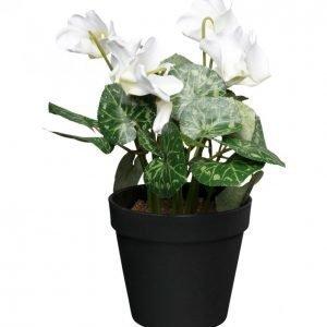 Kotikulta Syklaami Ruukussa Valkoinen 28cm