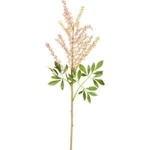 Lene Bjerre Flora Keinokasvi