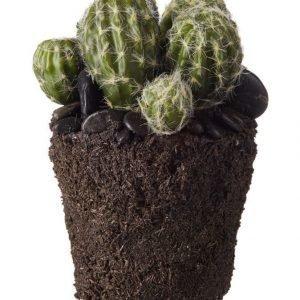 Lene Bjerre Sisustuskasvi Kaktus 17 cm