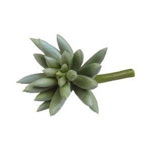 Lene Bjerre Sisustuskasvi Mehikasvi 11 cm