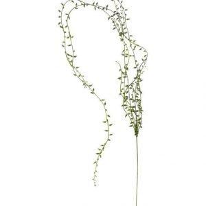 Lene Bjerre Sisustuskasvi String Of Pearls