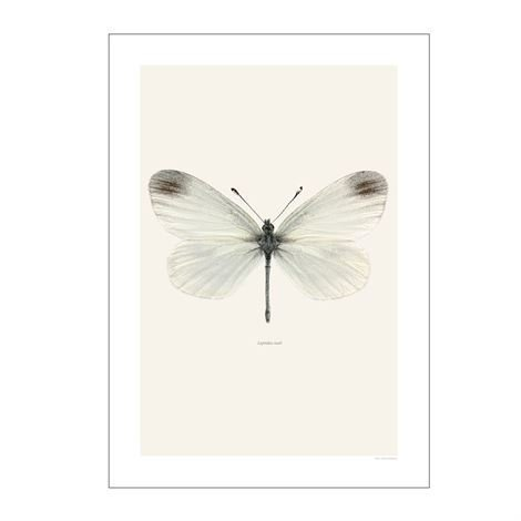 Liljebergs Liljebergin Makrovalokuva 40x50 cm Leptidea Reali