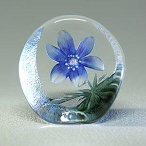 Målerås Glasbruk Floral Fantasy Sinivuokko
