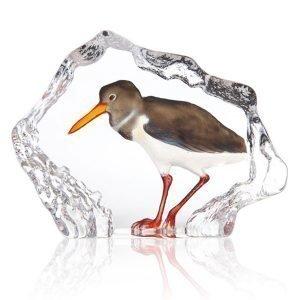 Målerås Glasbruk Wildlife Strandskata