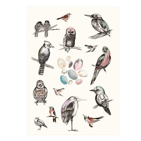 Mini Empire Birds Juliste 50 x 70 cm.
