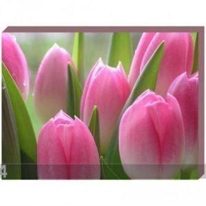 Og Taulu Canvas - Vaaleanpunaiset Tulppaanit 50x60 Cm
