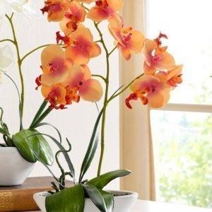 Orkidea Oranssi