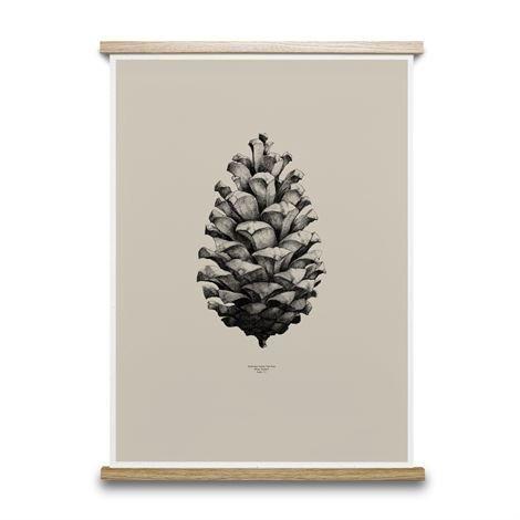 Paper Collective 1:1 Pine Cone Juliste Hiekka 50x70 cm