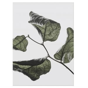 Paper Collective Floating Leaves 03 Juliste A4
