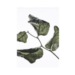 Paper Collective Juliste Floating Leaves 03 A3