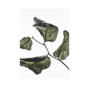 Paper Collective Juliste Floating Leaves 03 A4
