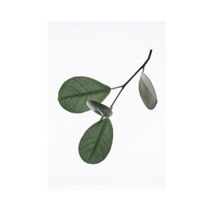 Paper Collective Juliste Floating Leaves 05 A3