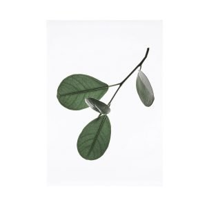 Paper Collective Juliste Floating Leaves 05 A5