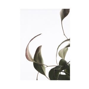 Paper Collective Juliste Floating Leaves 08 A4