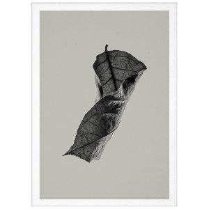 Paper Collective Sabi Leaf 04 Juliste