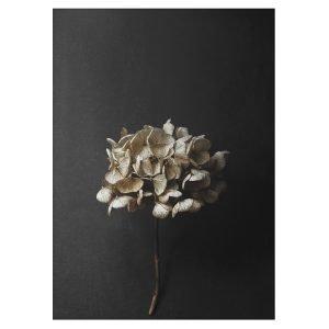 Paper Collective Still Life 04 Juliste 50x70 Cm