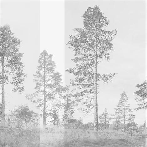Photowall Panorama Valokuvatapetti Harmaa