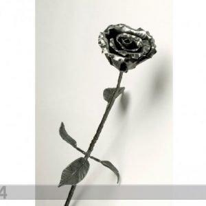 Ross Taottu Ruusu