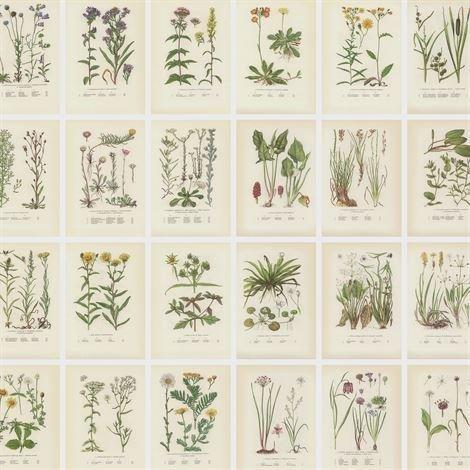 Sandberg Wallpaper Botanica Valokuvatapetti Beige