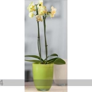 Sg Orkidearuukku Diana