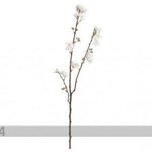 Shishi Tekokukka Kermansävyiset Kukat 68 Cm