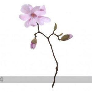 Shishi Tekokukka Magnolia Roosa Oksa 50 Cm