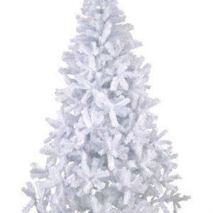 Star Trading Joulukuusi Quebec Valkoinen