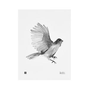 Teemu Järvi Illustrations Kuukkeli Juliste 30x40 Cm