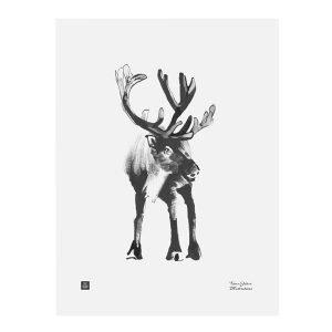 Teemu Järvi Illustrations Poro Juliste 30x40 Cm