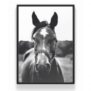 The Nordic Poster Horse Face Juliste Harmaa 30x40 Cm