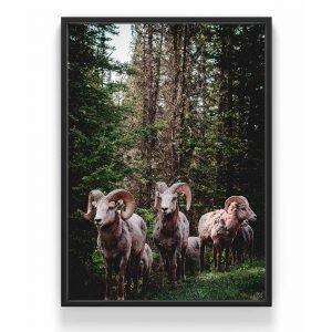 The Nordic Poster Mountain Goat Juliste Vihreä 30x40 Cm