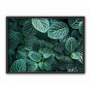 The Nordic Poster Nerv Plant Juliste Vihreä 50x70 Cm