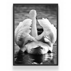 The Nordic Poster Swan Wings Juliste Harmaa 50x70 Cm