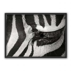 The Nordic Poster Zebra Eye Juliste Musta 50x70 Cm