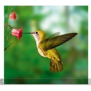 Visario Kuvatapetti Yellow Hummingbird 300x280 Cm